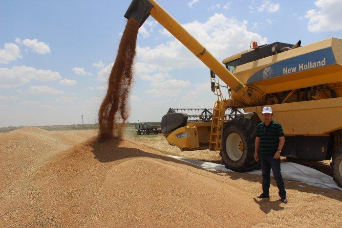 MYO'dan buğday hasadı