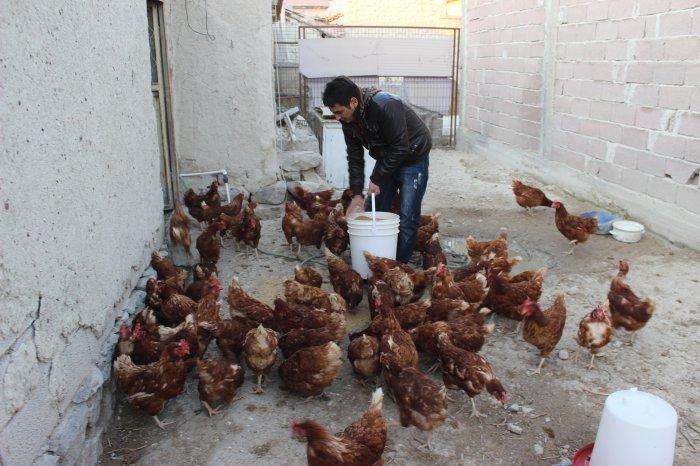 Organik yumurta yetiştiriciliği yapılıyor
