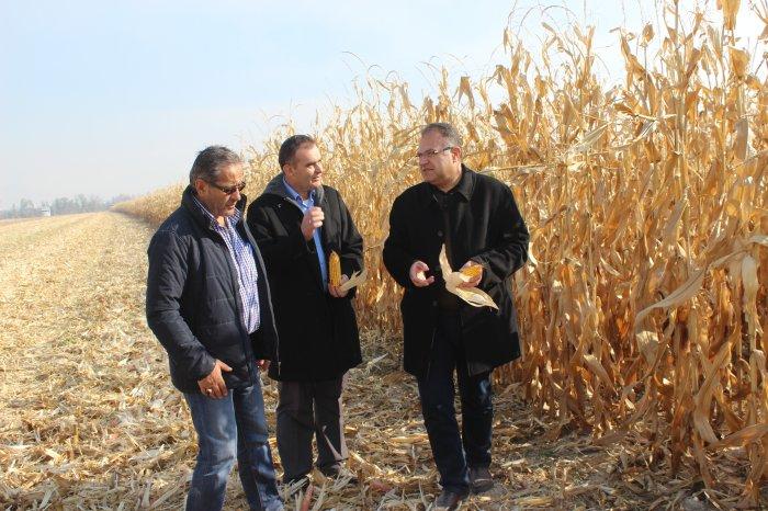 Uygulama sahasında mısır hasadı